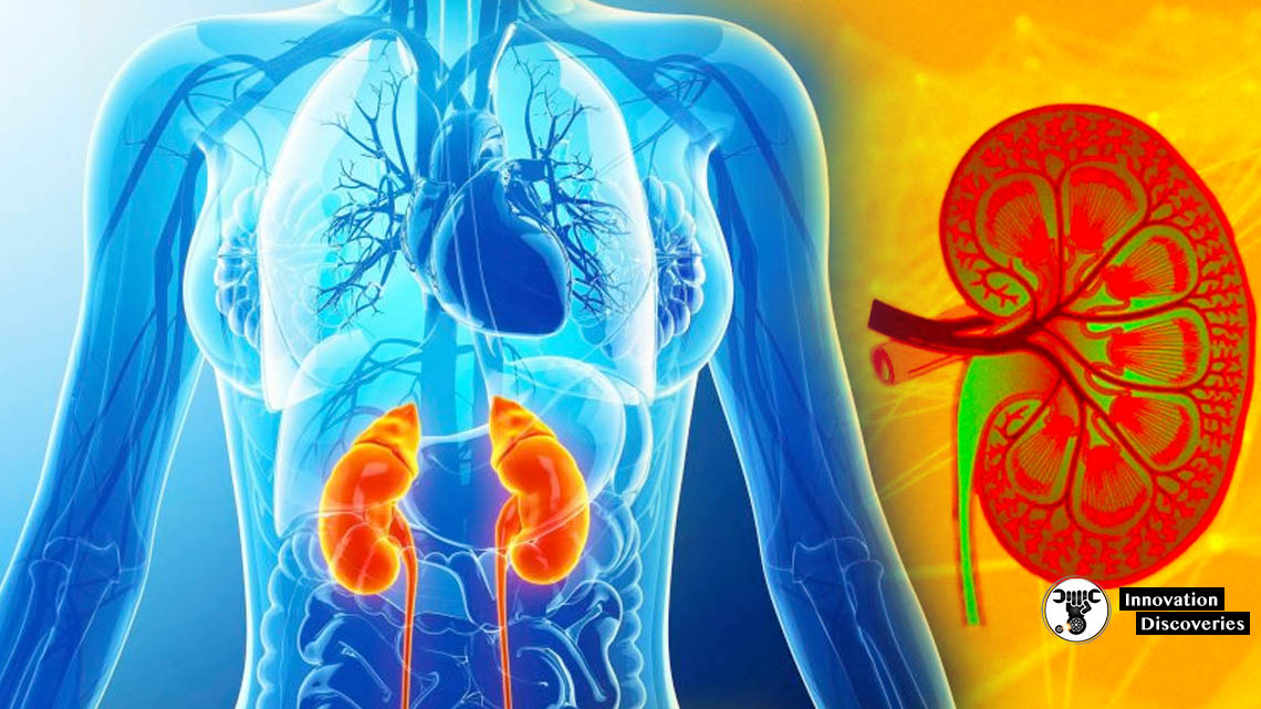 Google's AI Company Unveils New Algorithm To Predict Acute Kidney Injury 2 Days Earlier | Innovation Discoveries