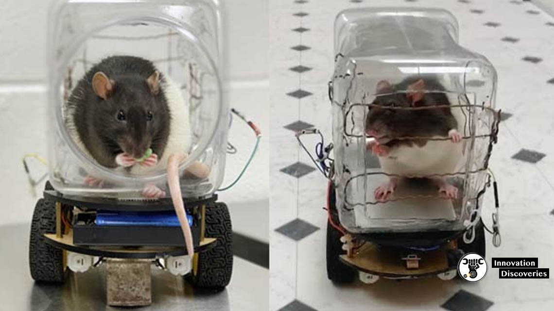 Researchers Train Rats To Drive A Tiny Car | Innovation Discoveries