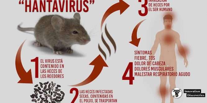 Hantavirus Takes The Life Of Chinese Man. Here Is All You Need To Know About This Virus