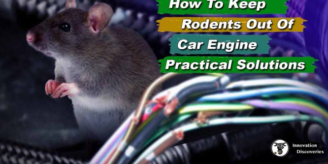 How To Keep Rodents Out Of Car Engine – Practical Solutions